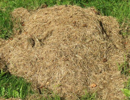 Genbrug dit græsafklip