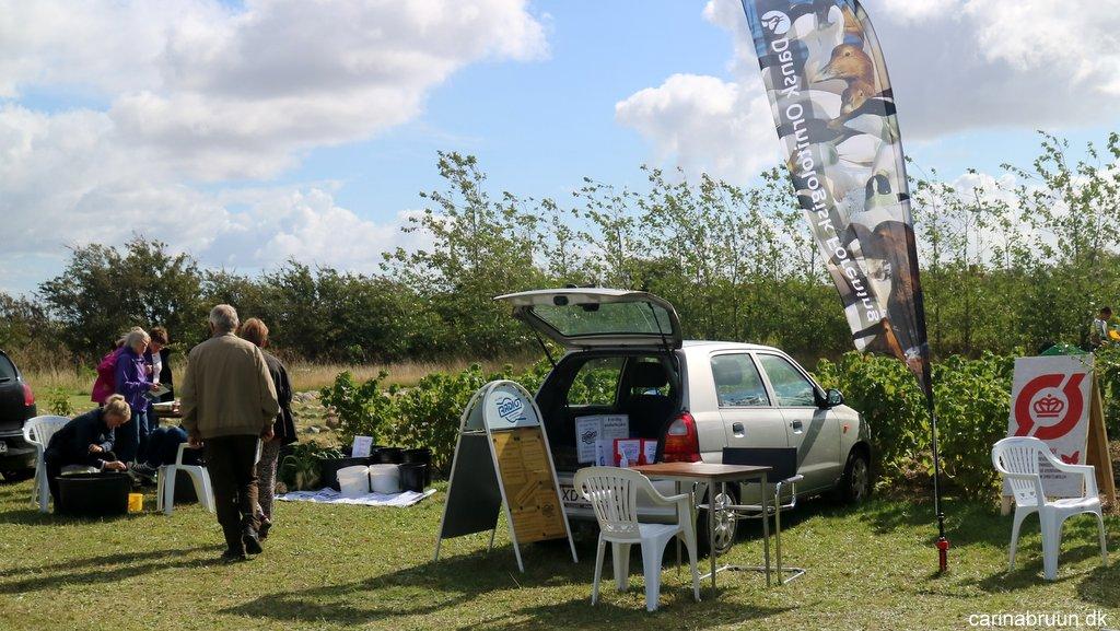 Sensommer høstmarked...   carina bruun's blog