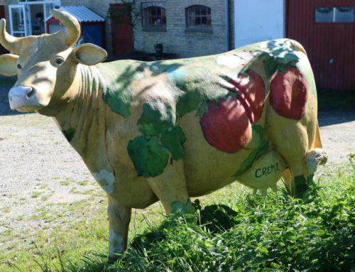 Haveambassadør – kursus 1