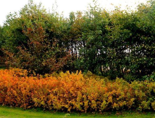 Få efterårsfarver ind i din have