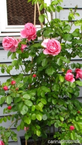 'Leonardo de Vince' i krukke haven