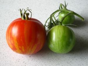 Tomat 'Tigrella' 2