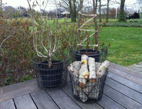 Trådkurve i haven